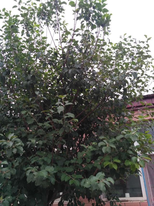 44800青蘋果影視院影,你能找到幾個青蘋果?我感覺我好像瞎了