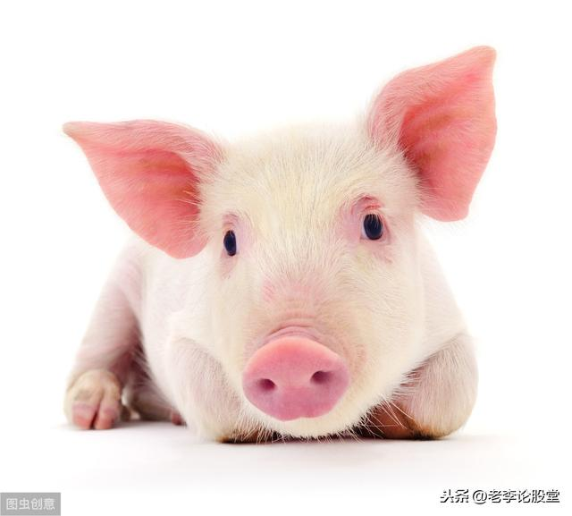 论股堂直播,老李论猪:猪肉板块主力思维与操盘总纲解析