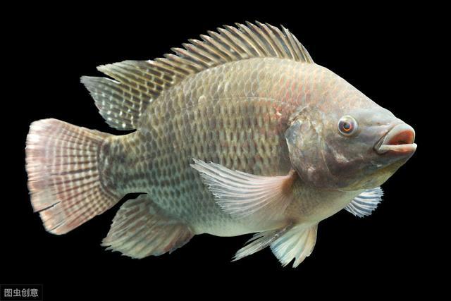 """被广东人称为""""垃圾鱼"""",4元1斤不讨喜,为何深受国外人青睐?"""