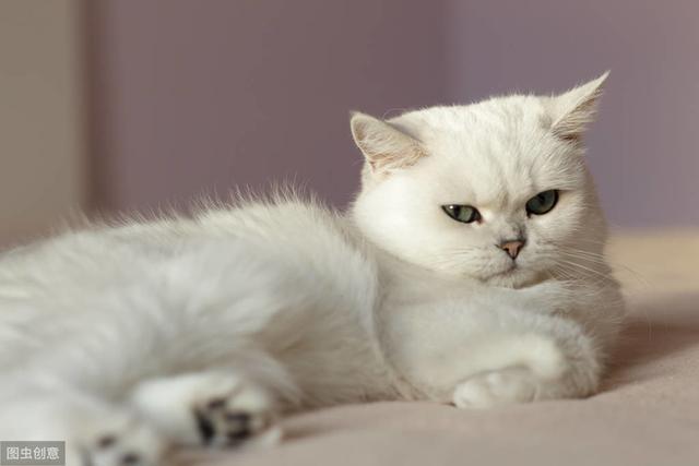 猫不开心时,铲屎官别增加猫的压力,避免3种与猫接触方式-第4张图片-深圳宠物猫咪领养送养中心