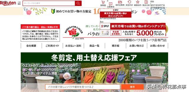 一颗月季苗250元,中国人直呼买不起,月季的版权应该值多少钱