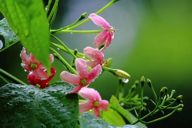 春日杂诗,七律.春日偶得