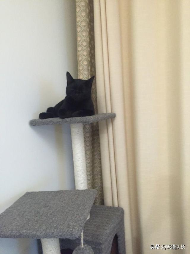 猫的智商到底能有多高?看网友家小黑猫的神操作吧-第12张图片-深圳宠物猫咪领养送养中心