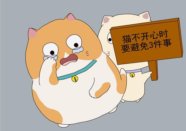 猫不开心时,铲屎官别增加猫的压力,避免3种与猫接触方式-第1张图片-深圳宠物猫咪领养送养中心
