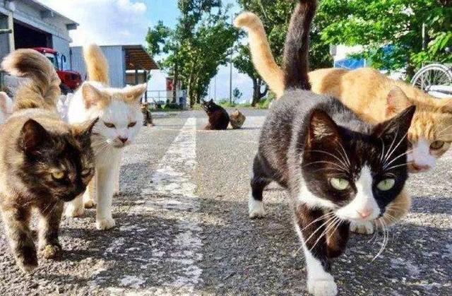为什么猫咪在发情期间喜欢到处乱尿,并且气味比平时的尿液难闻?-第4张图片-深圳宠物猫咪领养送养中心