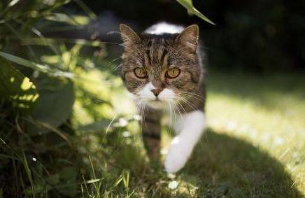 猫咪在家里上蹿下跳,这是天性使然,铲屎官可千万别去改变它们-第8张图片-深圳宠物猫咪领养送养中心