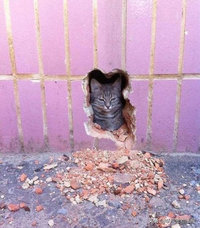 有一种猫咪是关不住的,请欣赏知名电影海报——喵申克的救赎-第1张图片-深圳宠物猫咪领养送养中心