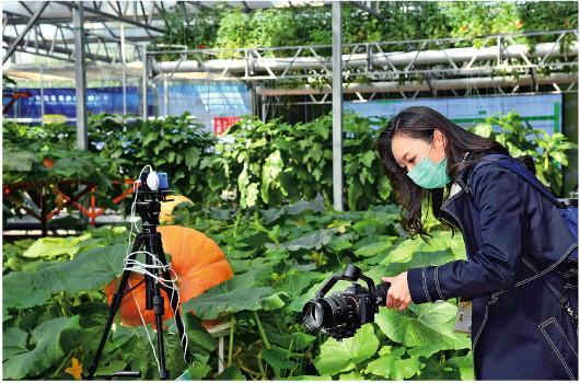 热点直击丨寿光菜博会首次网上办_加拿大28微信群