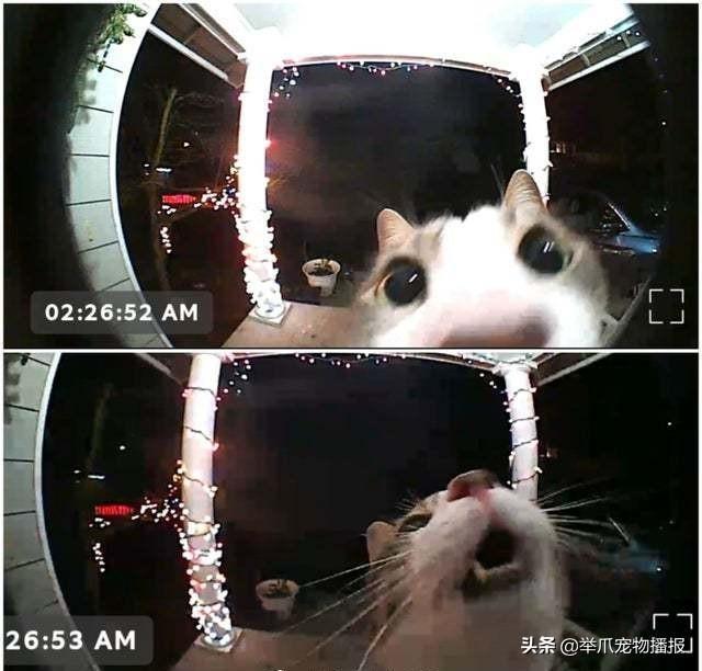有一种猫咪是关不住的,请欣赏知名电影海报——喵申克的救赎-第4张图片-深圳宠物猫咪领养送养中心