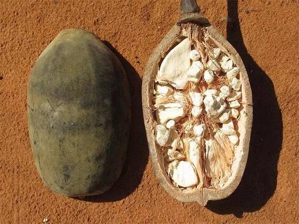 这个普通非洲水果曾被贝爷夸赞,味道真的很好吗?
